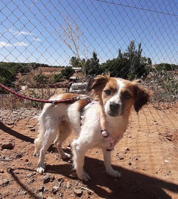 Chenoa adoptée par Petra