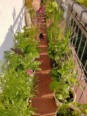 Die einjährigen Blümchen genießen die Sonne, der Blumenbalkon befindet sich auf der Ostseite, bis ca. 12 Uhr gibt es Sonne: