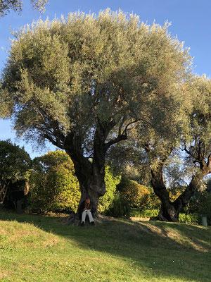 Gerd bei seiner Lieblingsbeschäftigung ... Zeichnen ... gerne auch Olivenbäume
