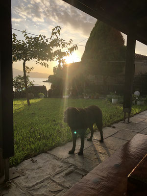 Coco genießt die letzten Sonnenstrahlen des Tages.