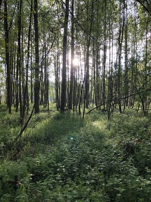 Schöne kleine Wälder.