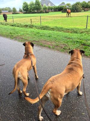 samen met Roos paardjes kijken