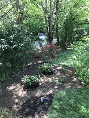 Rollrasen verarbeiten und Pflanzen setzen in Königstein
