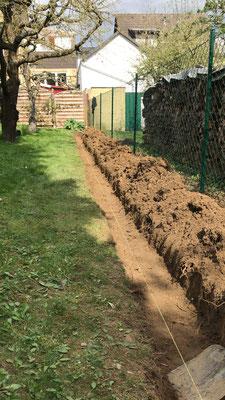 Graben für eine Thuja-Brabant-Hecke