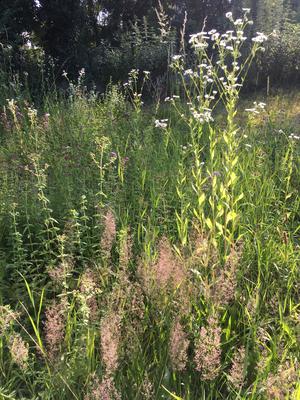 Gräser und Feinstrahl- feinste Strukturen (Dagmar Schülke)