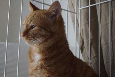 ネコトヒト,首輪;猫と人,nekotohito,ネコトヒト