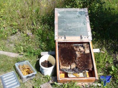 德米特里用自製的太陽能箱來熔化蜂蠟