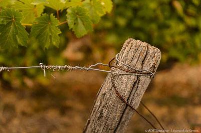 trellising-workshop-guided-wine-tours-tastings-Loire-Valley-vineyard-Vouvray-Touraine-Tours-Amboise-Rendez-Vous-dans-les-Vignes-Myriam-Fouasse-Robert