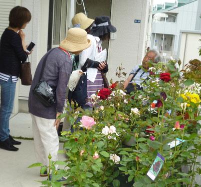 バラの「園芸相談(奥=園芸デザイナーの井野元さん)」や「花苗の販売」