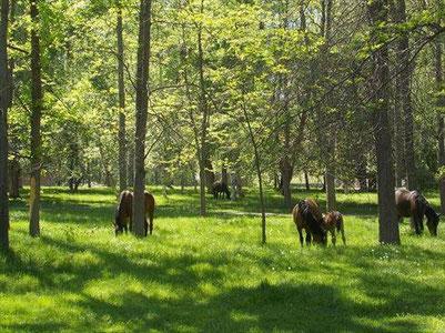 森林公園に普通に馬が放牧されているのがさすがキルギス。羊もうろうろしてました。まさしく「牧歌的」な国です