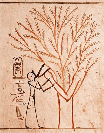 Thutmosis III. wird von seiner Mutter Isis in Gestalt einer Baumgöttin genährt © Erik Hornung (zum Vergrößern anklicken)