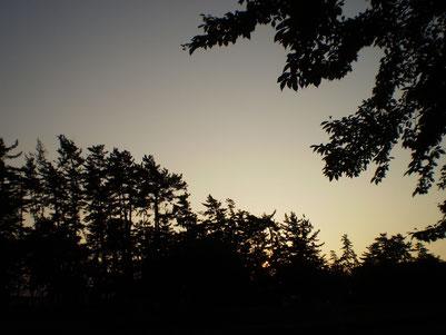 今日の夕方6時。松林と夕焼けの空。秋の気配を感じました