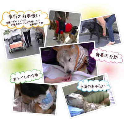 老犬 介護シーン