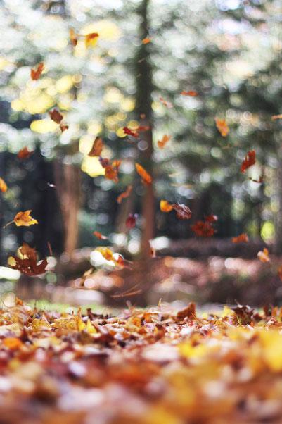 Feuilles mortes, automne,