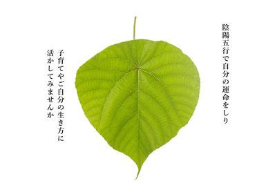 陰陽五行で自分の運命を知り、子育てや自分の生き方に活かしてみませんか。札幌や江別で出張鑑定を行っています。