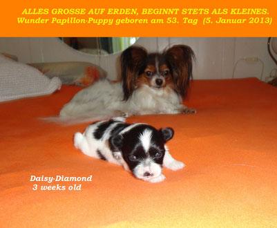 Daisy-Diamond mit Mami Balia