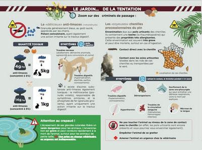 Une affiche des dangers du jardins pour le chien, le chiot par coach canin 16 educateur canin charente