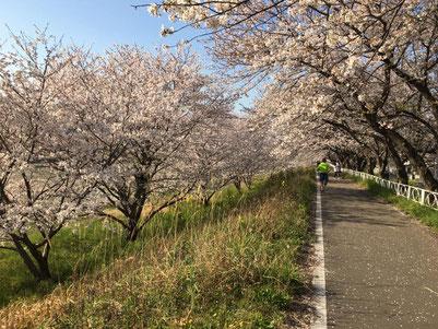 2020年4月、夢前川沿いのサイクリングロードをランニング中。松岡さん.com