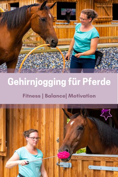 Gehirnjogging für Pferde: für mehr Fitness, Balance und Motivation