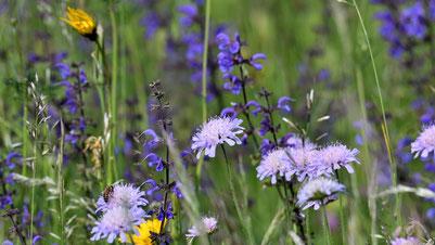 natürliche ätherische Öle aus Pflanzen gewinnen für Aromatherapie