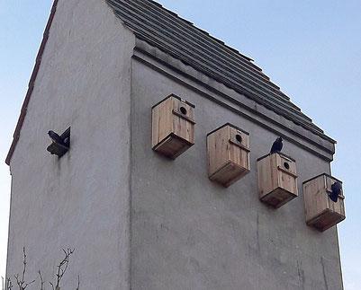 Die neue Dohlen-WG in Schulzendorf