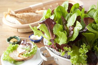 食卓におかれる軽食と、レタスが植っているコランダー