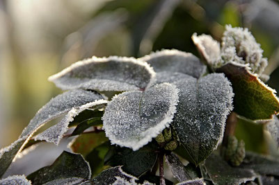 Baubiologie Kesberger Frost Blätter