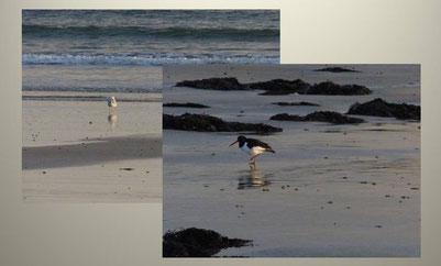 Strand, Wellen, Wasser, Strandläufer, Collage