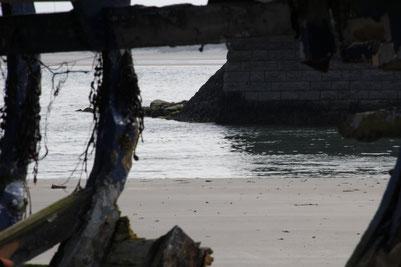 Schiffswrack, Holz, Durchsicht auf Mole und Wasser, Mullaghmore, Irland