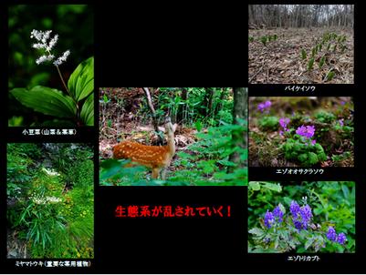 堀田先生資料写真