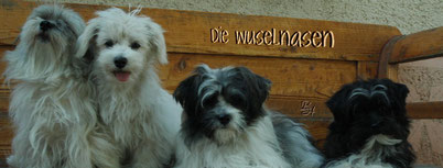 http://www.wuselnasen.jimdo.com