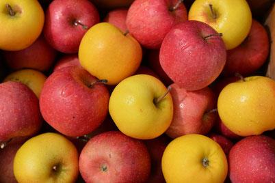 深川のりんご