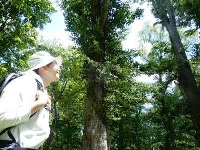森とオガワ