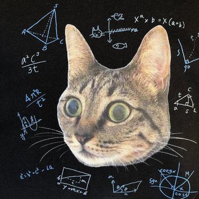 B. 猫の方程式