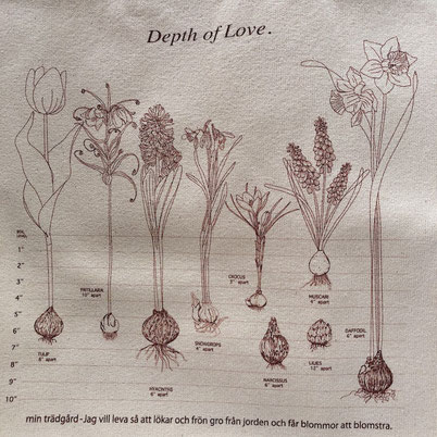 2. 球根を植える深さ