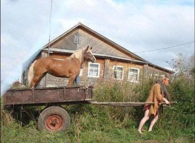 ...Pferde, welche umgezogen sind.