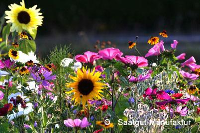 Beim Klick aufs Bild gelangen Sie zur Bienenweide- Aktion.