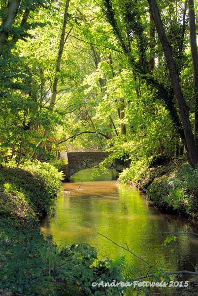 Wald, Barmen, Jülich, Brücke, Bach, Mühlenteich, Bäume, Grün, Spätsommer, sonnig