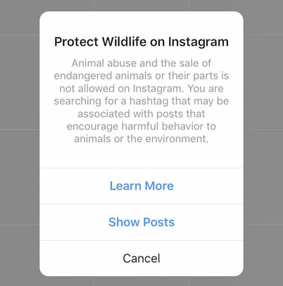 Instagram helps to stop elephant riding