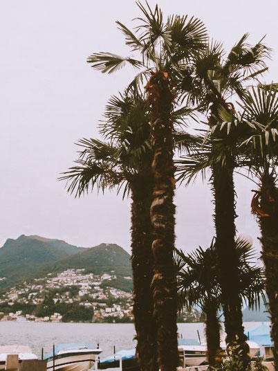 palm trees in Lugano, Switzerland