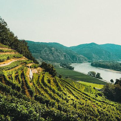 mountains and vineyards in the Wachau valley, a must-visit place in Austria