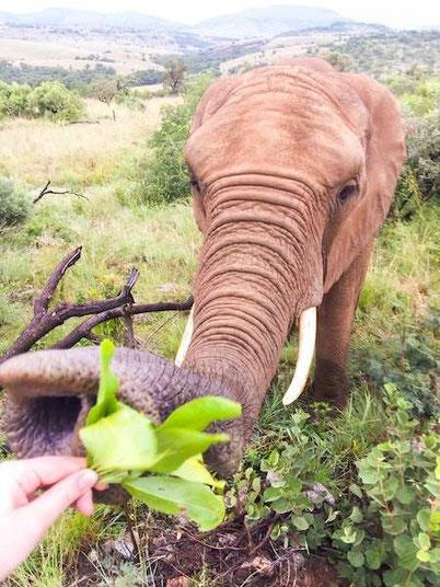 трансформирующие путешествия - волонтерский проект со слонами