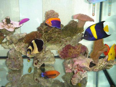 海水魚水槽設置