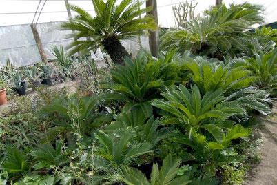 Succhi di piante fresche