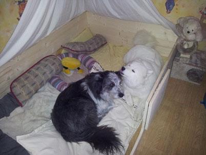 Pongo und Camina testen die Wurfkiste. Urteil: Sehr gemütlich