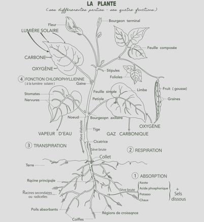 11. 植物について