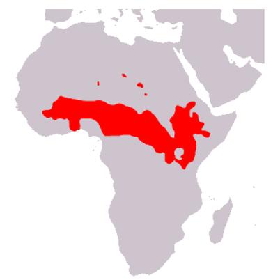 Répartition du Babouin Olive