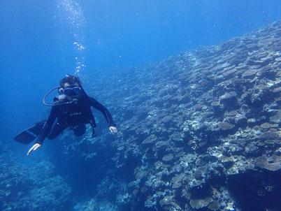 石垣島でのんびりダイビング「安心安全」ヒートハートクラブ