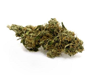 Futura 75 -cannabis light