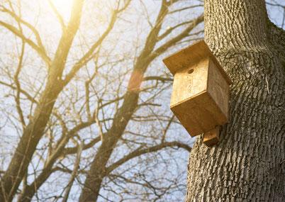 Pose de nids à mésanges pour processionnaires du pin et processionnaires du chêne
